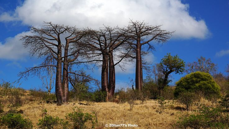 La baobabi, vizitand Red Tsingy si prin Parcul National Amber Mountain