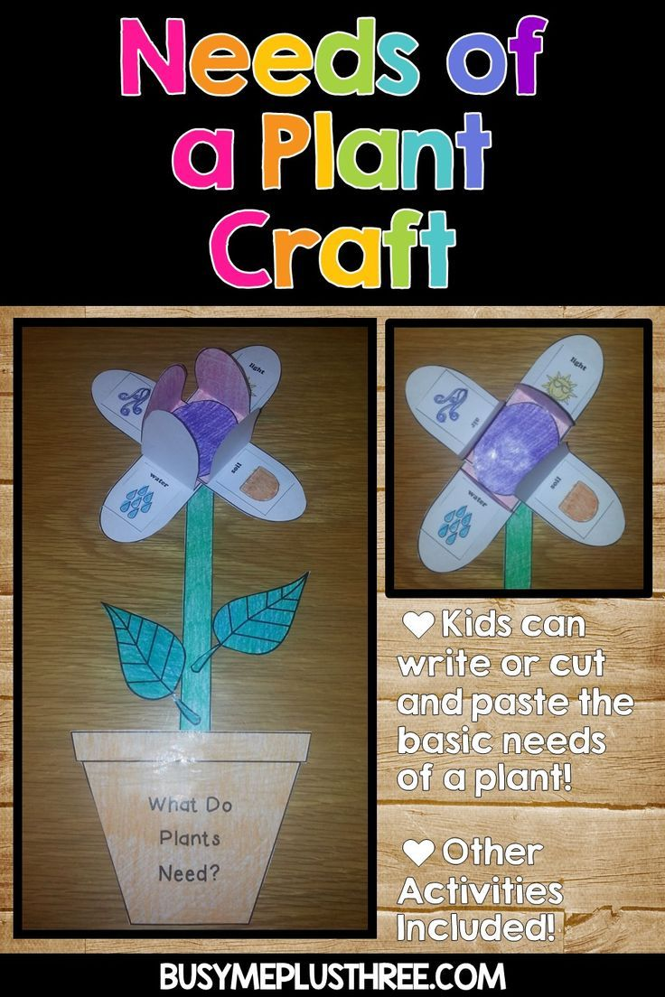 Are You Studying The Life Cycle Of A Plant This Fun Craft Is All About The Basic Needs Of Pl Fun Classroom Activities Plant Crafts Plant Life Cycle Worksheet [ 1104 x 736 Pixel ]