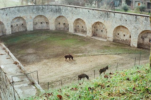Cavalli nel recinto delle mura veneziane e austriache verso san Bernardino, Verona 2012