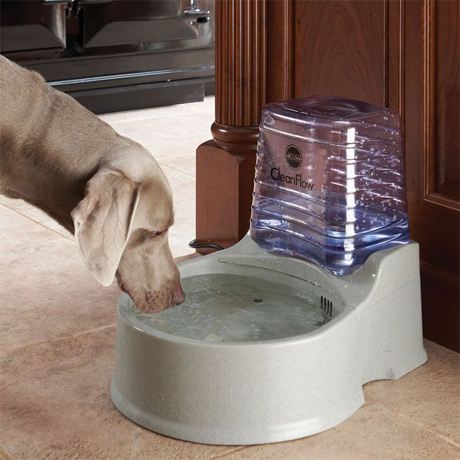 25 Best Ideas About Dog Water Bowls On Pinterest Raised