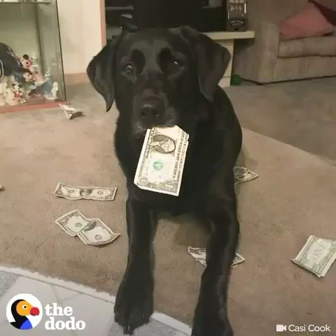 This very smart girl collects money to pay for treats 😂💰