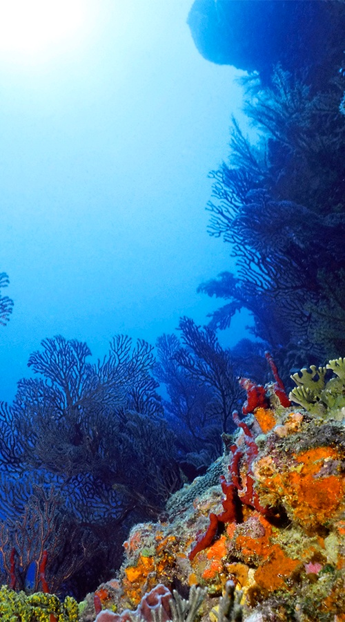 St. Vincent & The Grenadines » I want to go diving or snorkeling here, so beautiful!