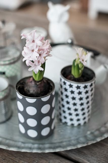 hyacinths in tin cans - use wrapping paper to decorate tin cans and use them to grow bulbs