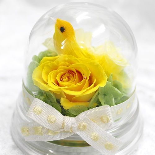 Garden Dome Yellow http://www.phy-f.com/products/detail.php?product_id=213