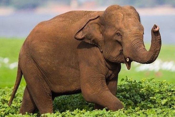 Happy elephant...