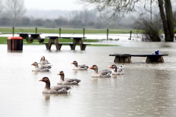 Picnic con le anatre.  (Imparare il potere dell'acqua che si riprende lo spazio tolto: tavolini per i picnic a Port Meadow, nell'Oxfordshire, sommersi dal Tamigi uscito dagli argini).  Ph: Steve Parsons