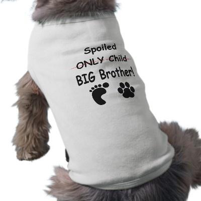Spoiled big brother doggie tee shirt by LockDesigns CUTE TBA Winner http://www.zazzle.com/lockdesigns?rf=238201910773838699