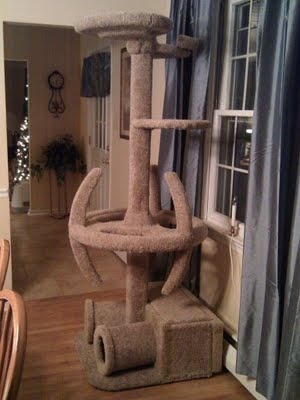 My cats would love this