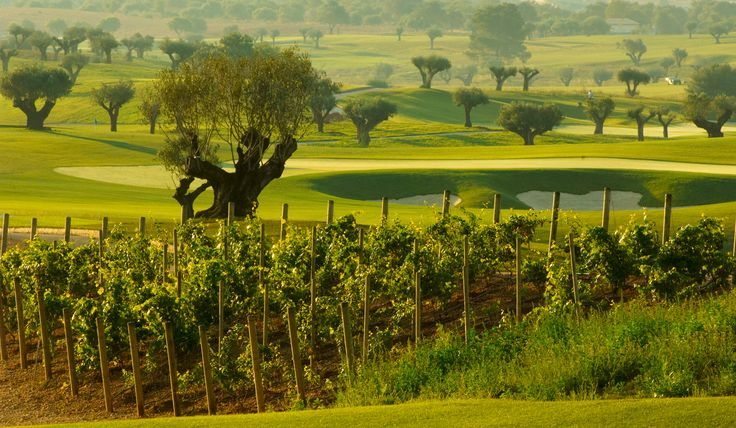 Golf & Wine at Golf Son Gual  www.golfandcountrytravel.nl