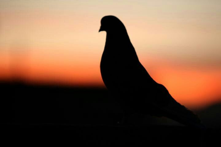 about silhouet bir...