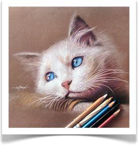 The Cat #1