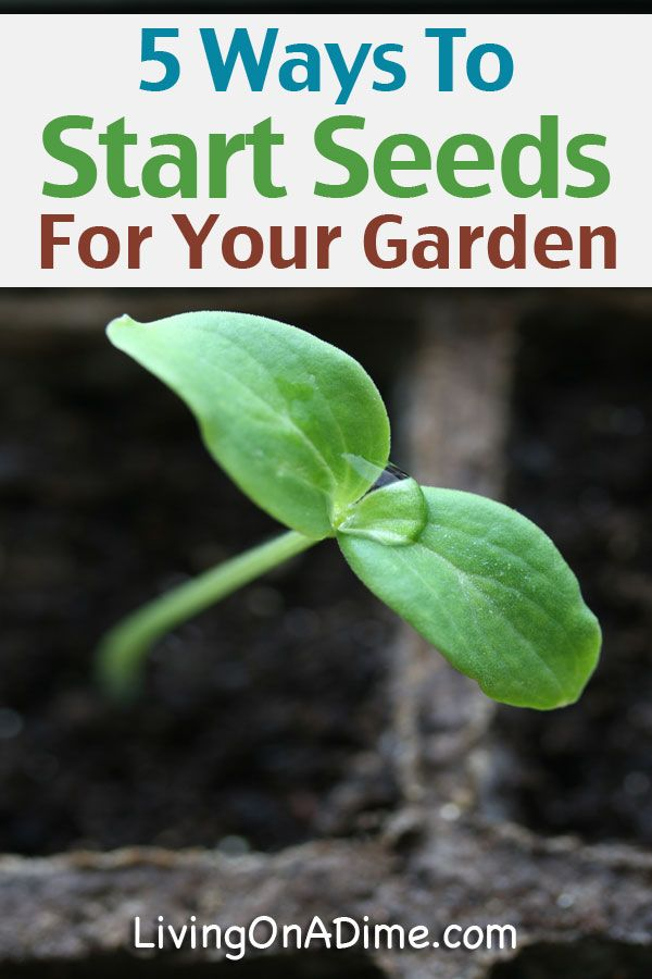 5 Ways To Start Seeds For Your Garden – Germinating Seeds