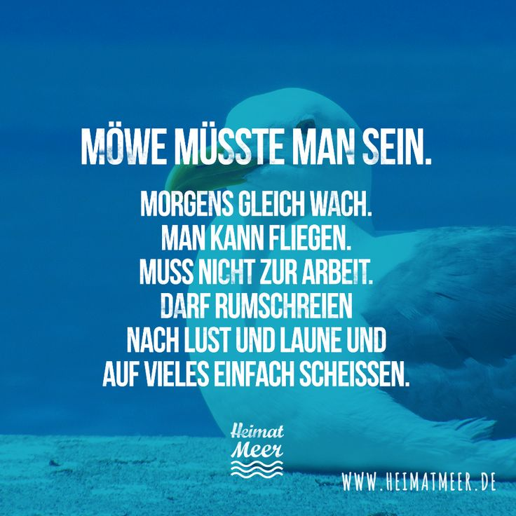 Möwe Müsste Man Sein! U003eu003e Sprüche MeerHumor ...