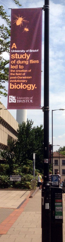 Lamp post banner university of Bristol