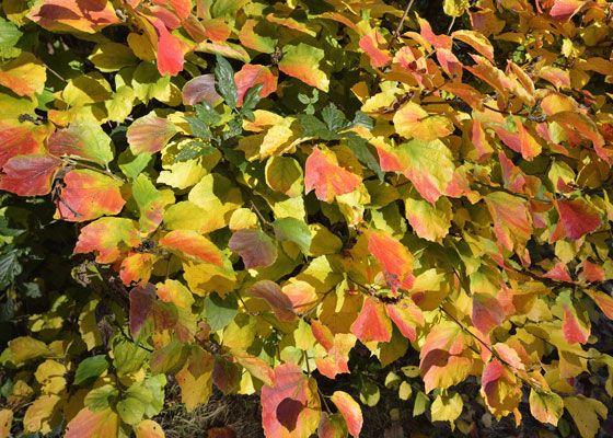 27 Best Fabulous Fall Foliage Images On Pinterest