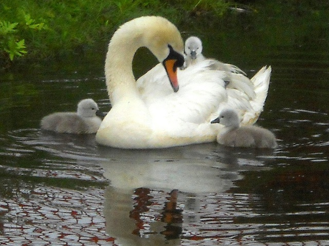mama and babies by Lizzie~Belle, via Flickr