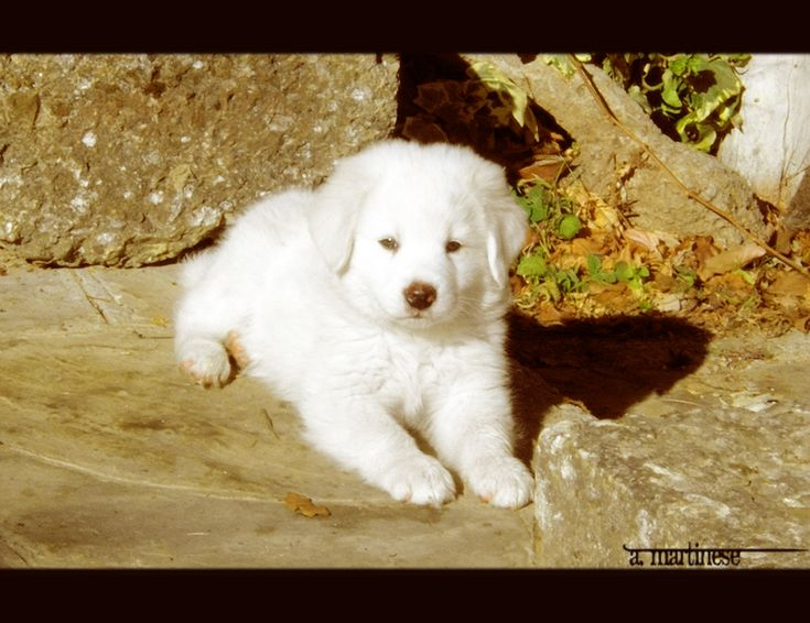 A serious dog by ~MancateEternita on deviantART