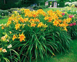 Park der Gärten - Sortimente/Sammlungen (Taglilien-Rondell)