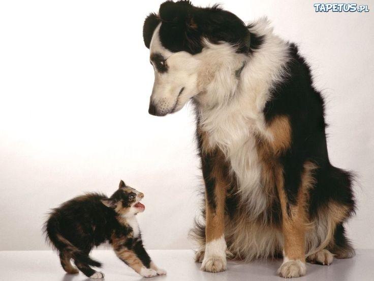 psy i koty - Hledat Googlem