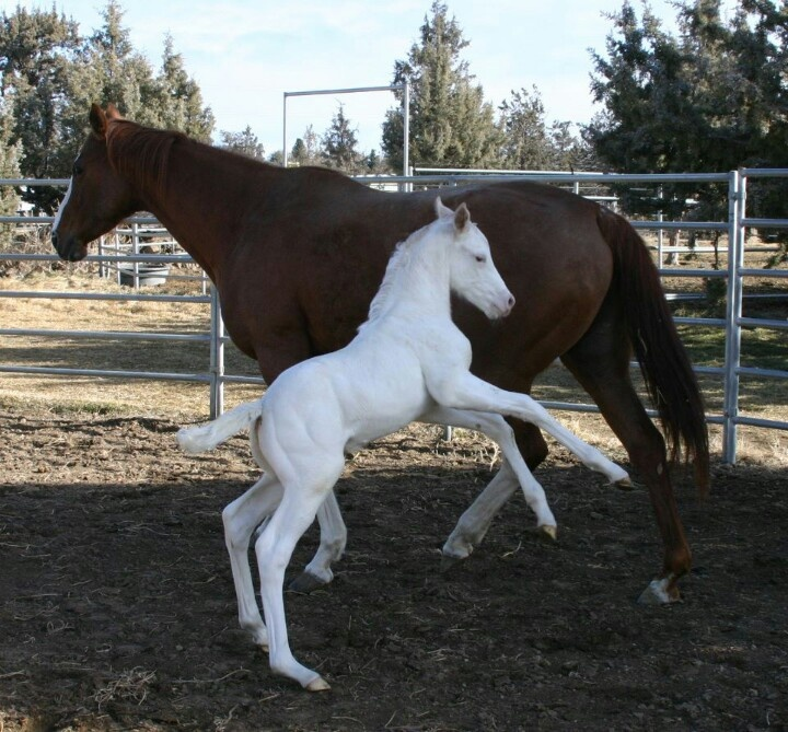 Cute White Baby Foal #horses