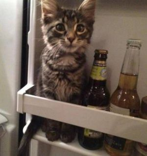 Very interesting post: Funny Cat Pictures - 18 Pics. Also dompiсt.сom lot of interesting things on Funny Cat.