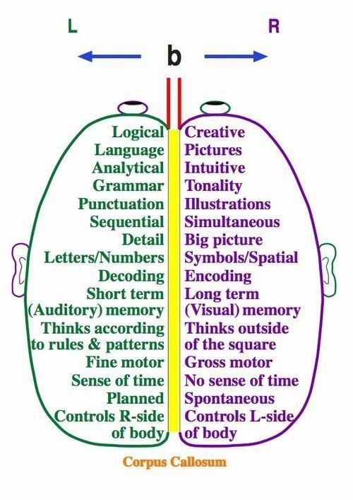 L/R Side Brain