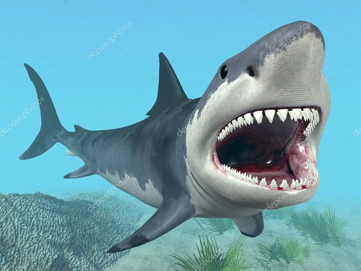 depositphotos_12779769-stock-photo-white-shark.jpg (1024×768)