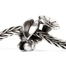 De winde, de geboortebloem van september, symboliseert hechte relaties en trouw.