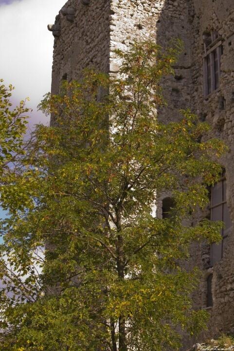 Albero castello