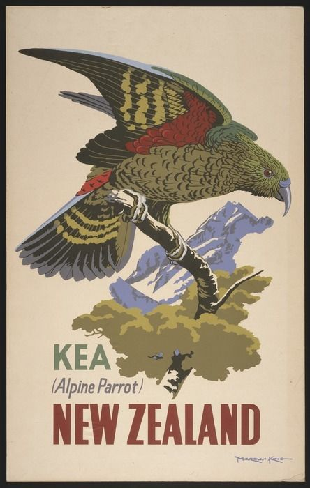 King, Marcus, 1891-1983 :Kea (Alpine parrot), New Zealand [ca 1957]