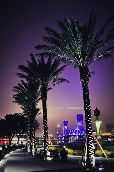 Jacksonville Landing behind Palms...nice picture Angie.