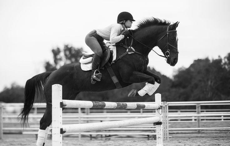 #jumper #horse