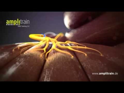 Amplitrain - Amplifitness | Amplifitness