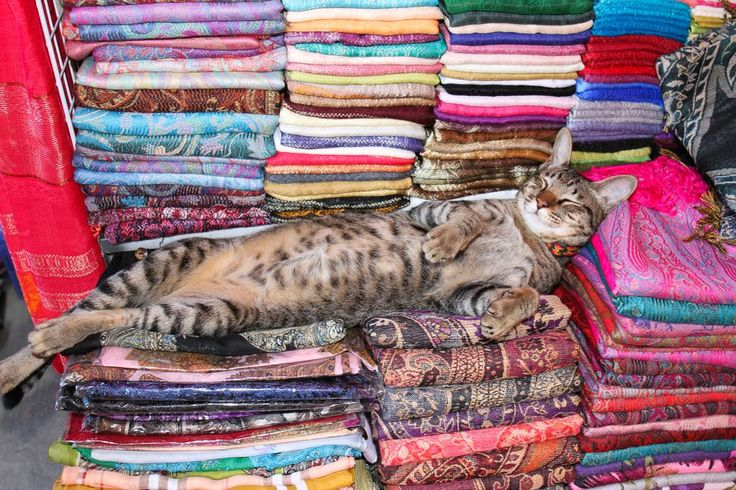 Lazy Cat In Myanmar Photo by Mateus Caltabiano -- National Geographic Your Shot