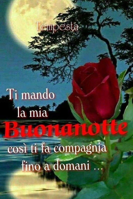 Buonanotte Buona Notte 2614934 Buona Notte Good Night Good