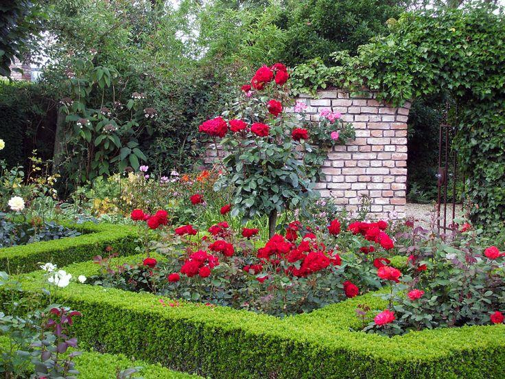 Rote Rosen.... - Bilder und Fotos