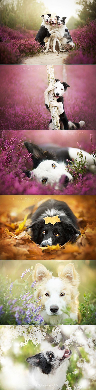 melhores imagens de dogs no pinterest