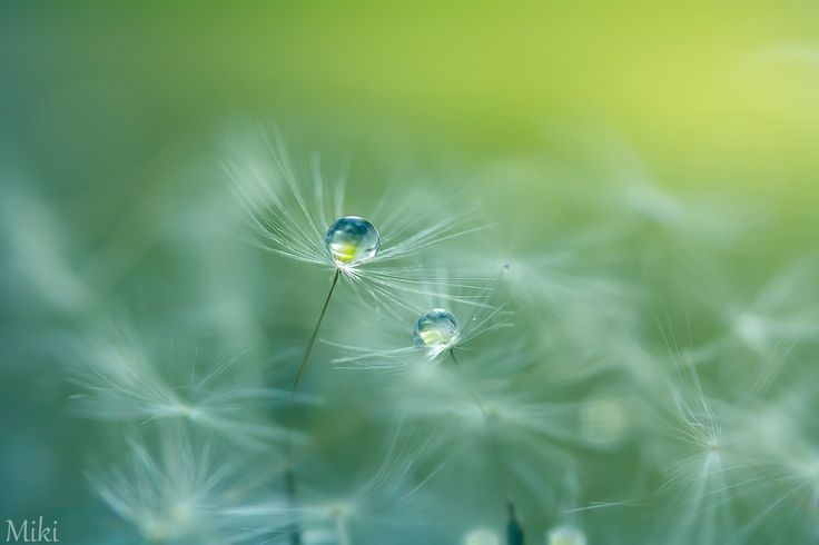 seeds of life by Miki Asai on 500px