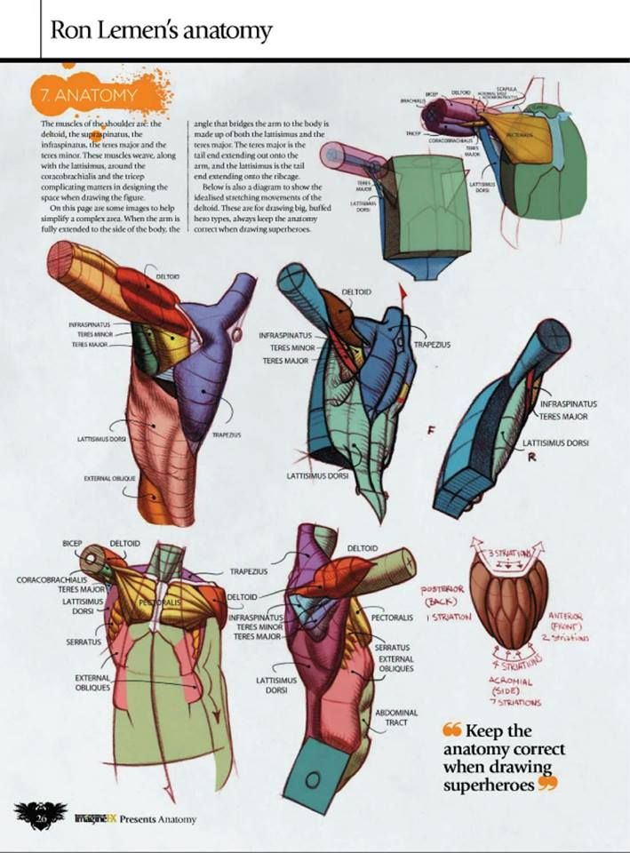 how to draw a human torso