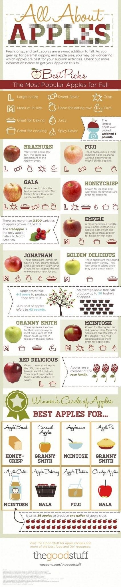 apples-fact-sheet