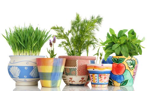 Try Southern Patio's line of ceramic planters when growing your own herbs and vegetables!  www.southernpatio.com