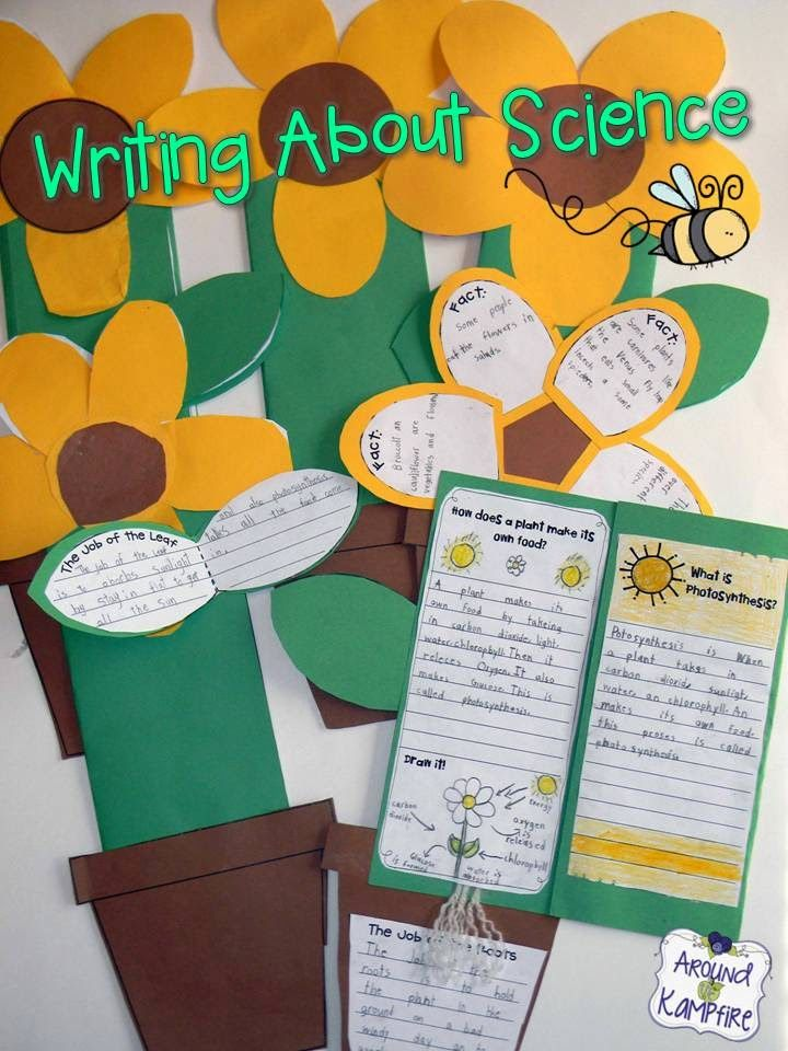 Life cycle of plants foldable booklet/lapbook. LOTS of creative and fun ideas for getting kids writing about science while teaching about the life cycle of plants. Also includes FREE printable anchor charts for photosynthesis and parts of a plant.