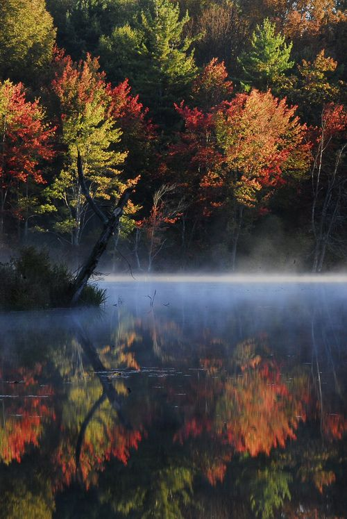 """These are the kind of views that make me want to live in a forest by the water.  """"foggy morning over the Southegan River"""""""