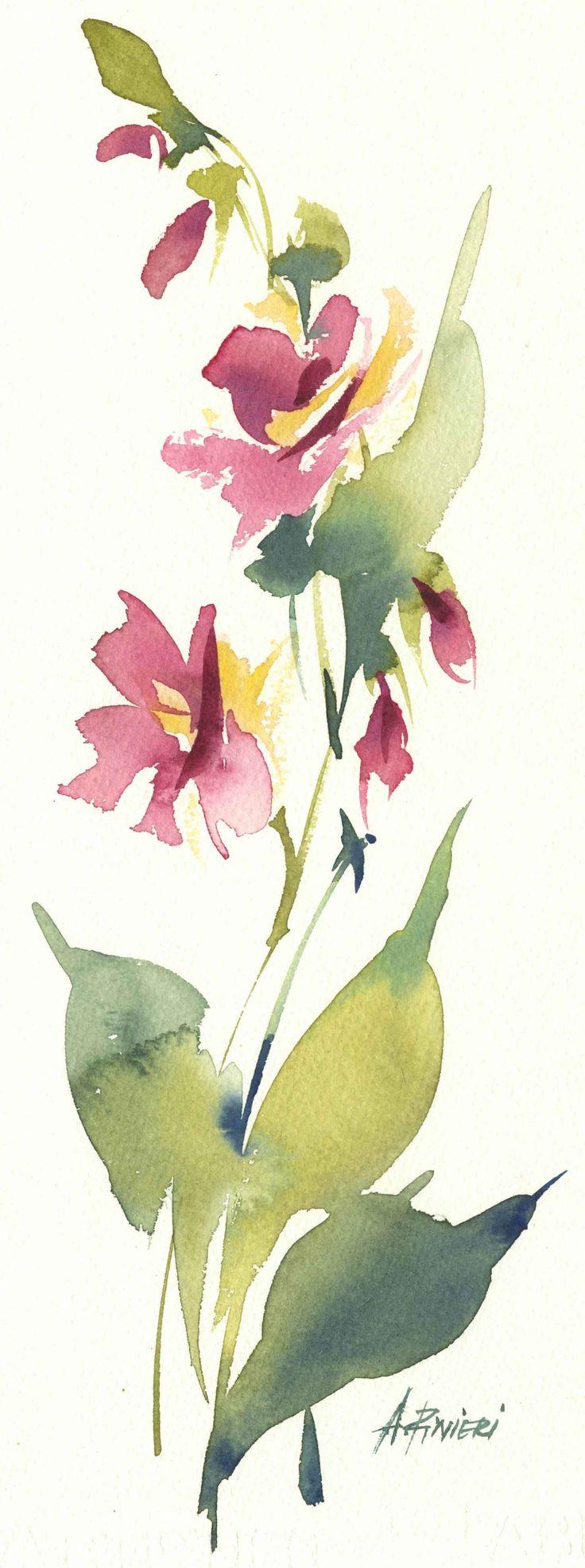 fiore  rosa  acquerello  watercolor  acuarela flores