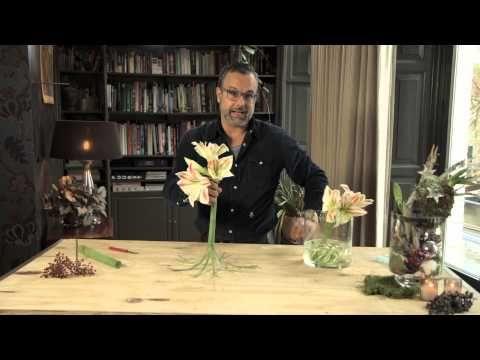 Amaryllis met gekrulde steel - YouTube