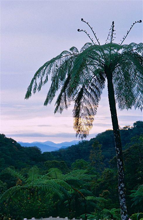 Kinabalu Park - Malaysia