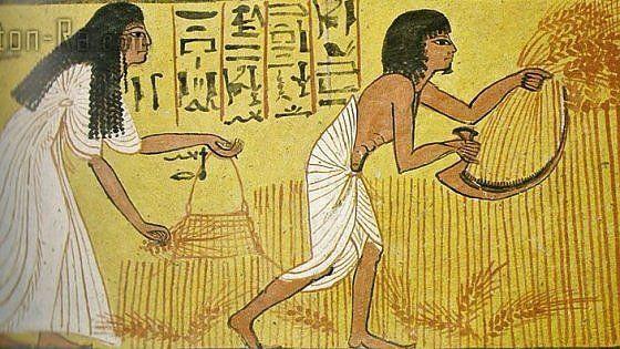 Le collezioni archeologiche mostrano una strada salutare: grani antichi, macinati a pietra, di origine controllata e no ogm