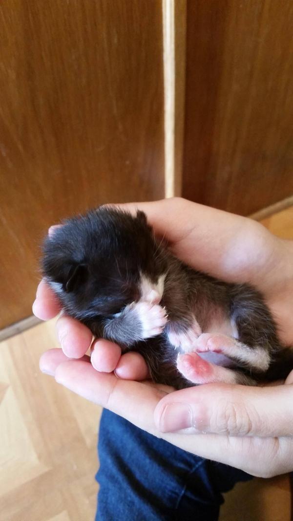 Saving Kittens At Best Friends Newest Nursery Whitekittens