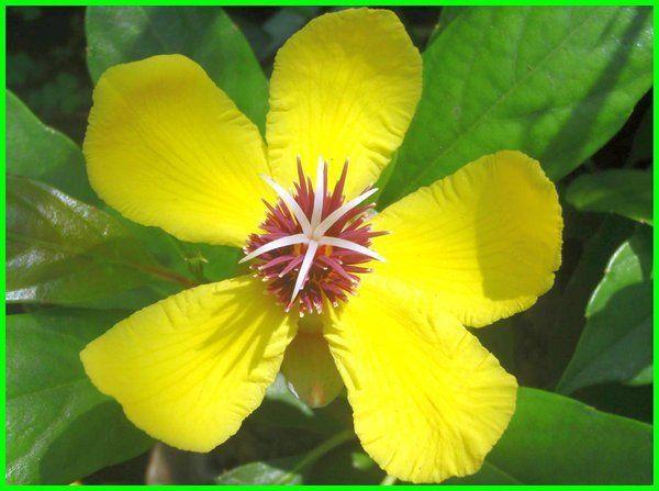 Daftar Hewan Dan Bunga Nasional 10 Negara Asean Tanaman Hewan