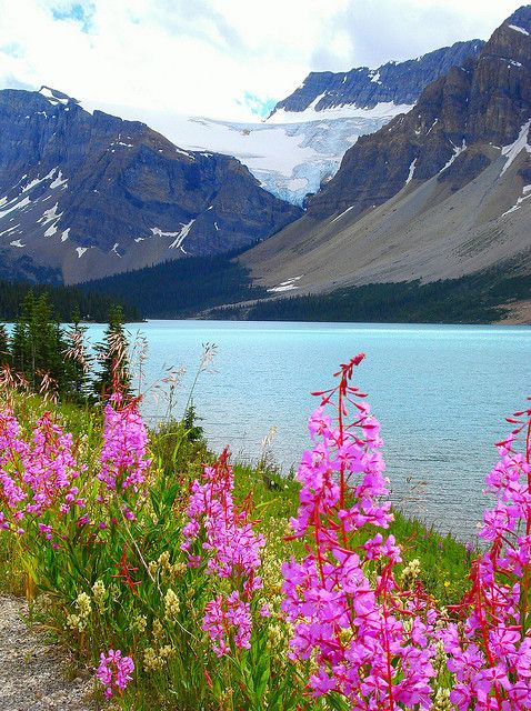 Alpine flowers on the shores of Lake Louise, Canada (by no body atoll).
